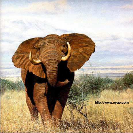 African Animals Simon 3. Artist Simon Combes - African Wildlife